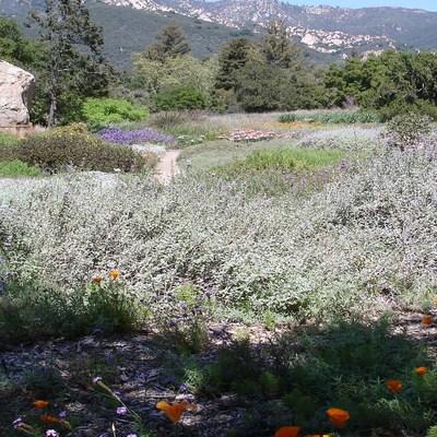 Botanic Garden, Santa Barbara