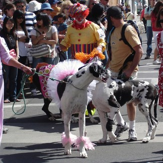 Santa Barbara Big Dog Parade